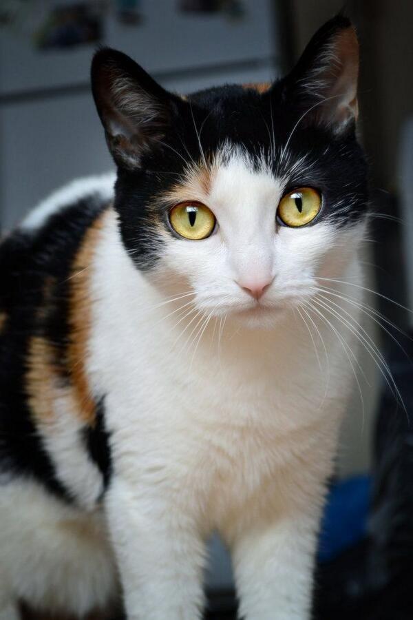 17 Best images about Cat Portraits on Pinterest | Orange ...