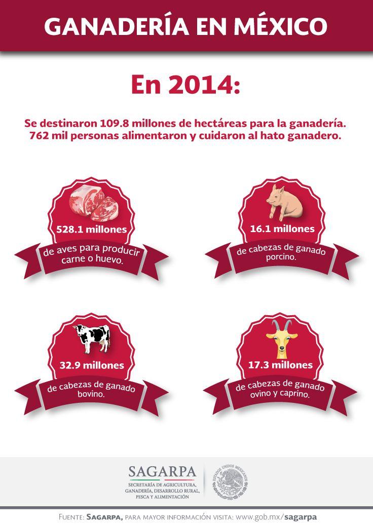 Ganadería en México. SAGARPA SAGARPAMX #SomosProductores