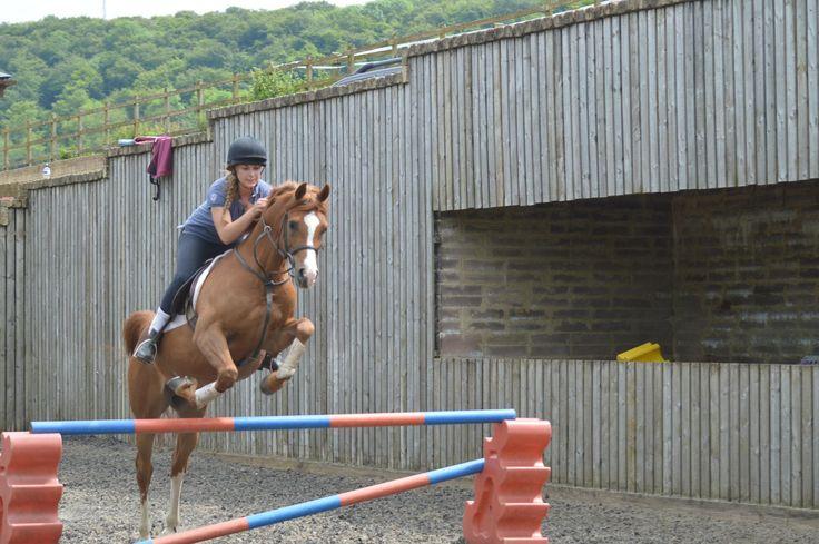 Champion Arabian horse for sale | HorseDeals.co.uk