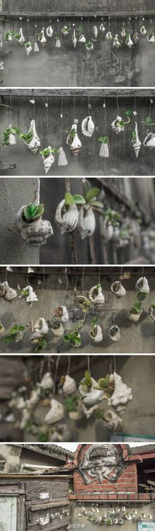 Tiny succulents or starts planted in a variety of shells. The grouping is what really makes this beautiful. Could be called a string sea garden.