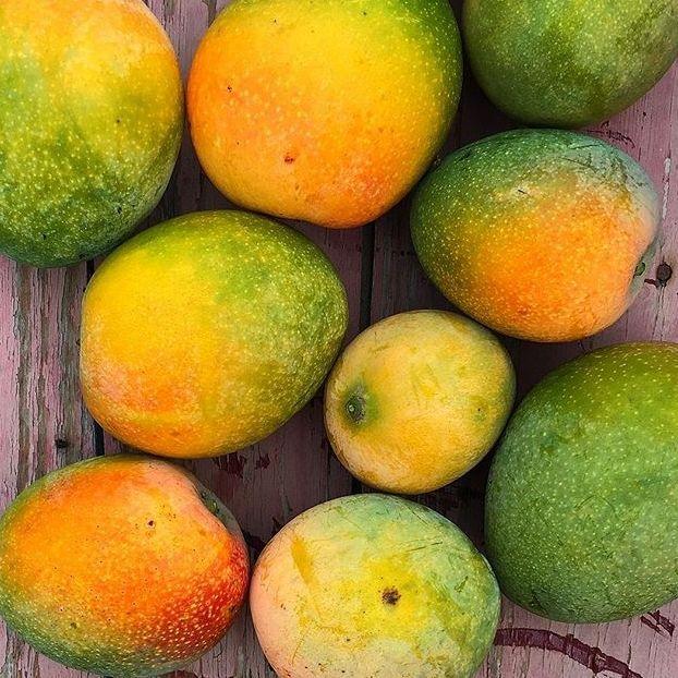 #Mango