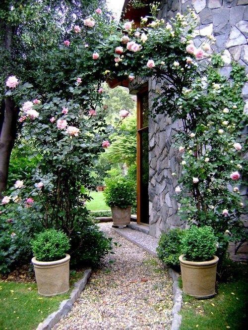 roses, rodos, azaleas,spring to summer... will I ever make it?
