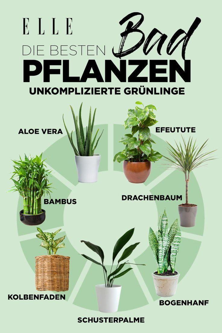 Klimaanlage: Diese Pflanzen sind ideal für zu Hause! – #die #dies # für …   – Inspiring Ideas