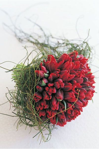 parrot tulips & dodda vine