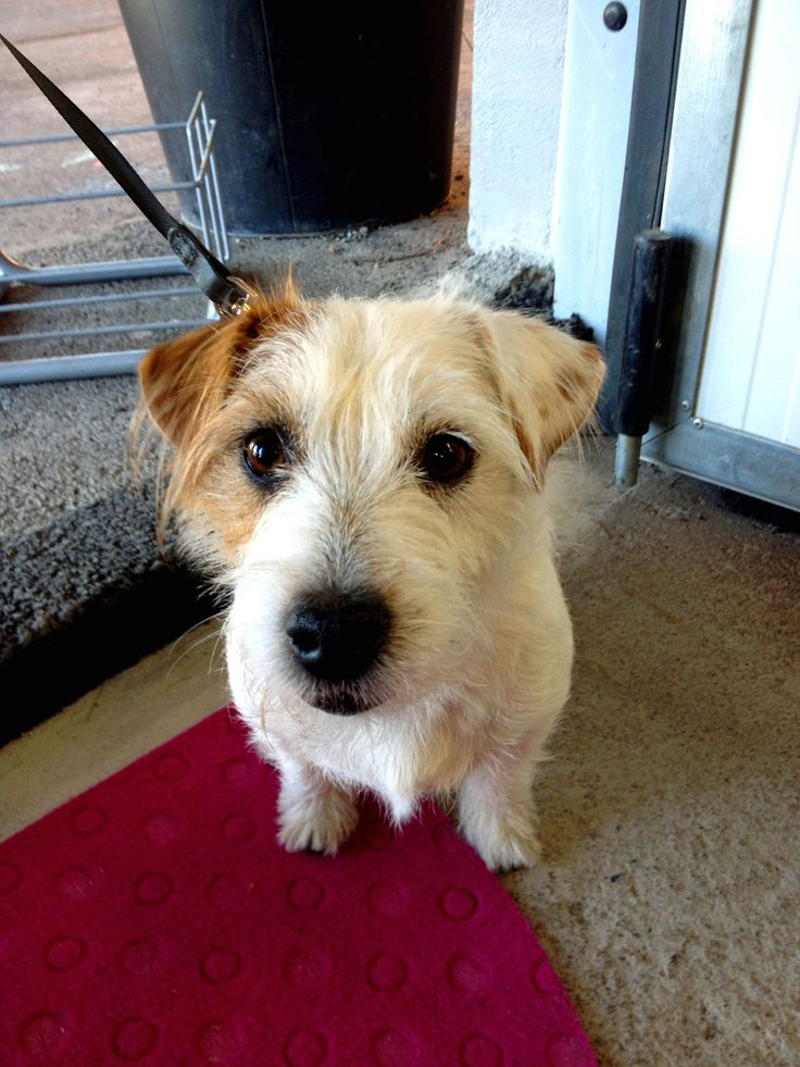 """Jack Russel's Terrier Lara can speak Finnish, English and Russian.  """"My mom is from Russia and dad from Finland. I am happy to communicate with other dogs around the world!"""" www.visitporvoo.fi"""