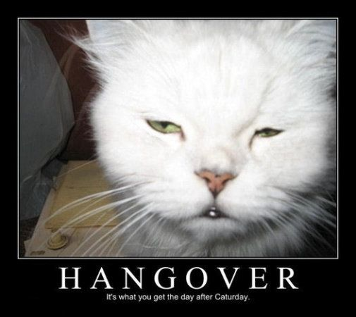 Hangover Movie Quotes Funniest Lines: The Cat's Hangover! - A Funny Picture