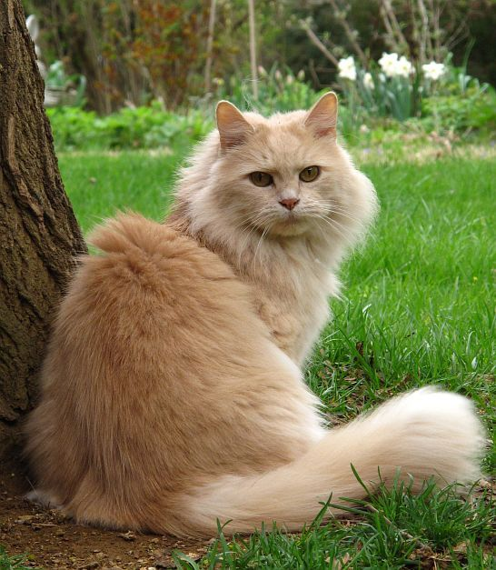 """""""A cat is a lion in the grass."""" --English Proverb"""