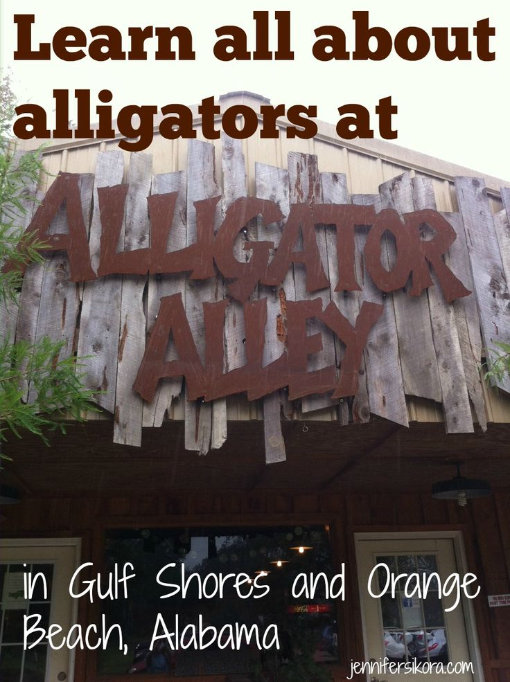 Alligator Alley Gulf Shores and Orange Beach
