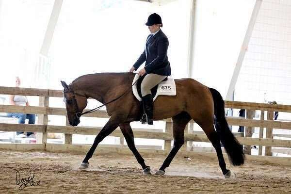 10yr old dun gelding by One Hot Invitation (by Invitation Only).  Ready to go, shown in All-around events.  He is finished in equitation, horsemanship, showmanship, western pleasure, and hunter under saddle.  He also is schooling trail and lead changes at home.  Top 10s at Buckskin Worlds in 2016.