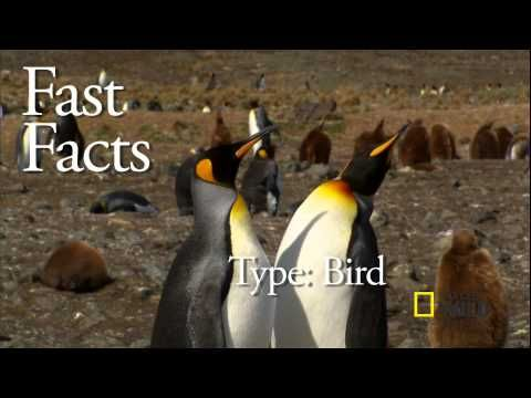 Penguin Fast Facts 1 min video