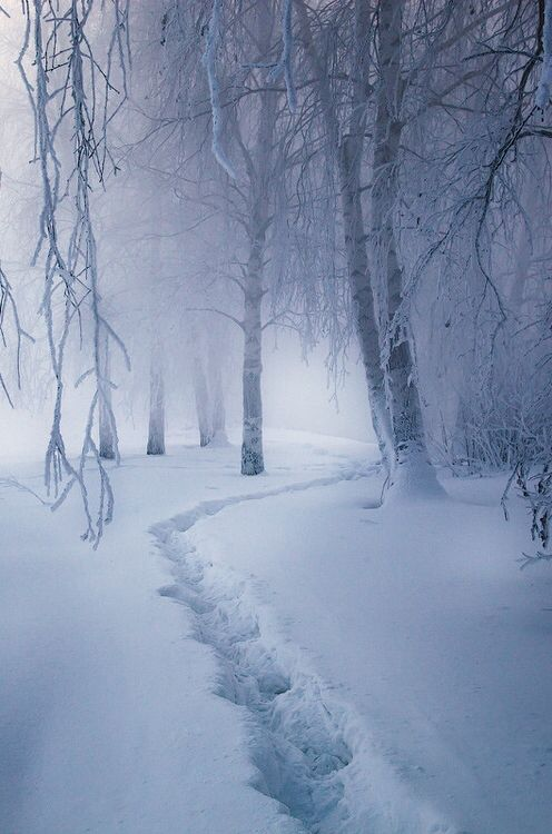 Winter is the most beautiful and cold season, it usually refers to loneliness.