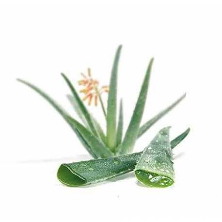 Η θαυματουργή τροφή από τα βάθη των αιώνων! -  Βιολογικός αγνός χυμός αλόης - Organic premium aloe vera juice