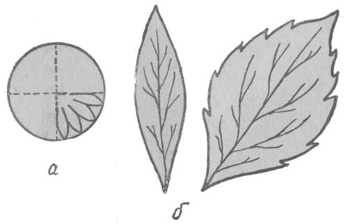Выкройки астры: а - лепесток, б - листья