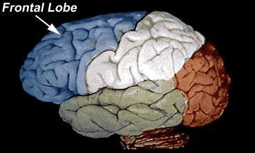 The brain, neuroscience for kids.