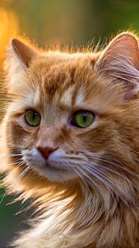 Kot norweski leśny o zielonych oczach