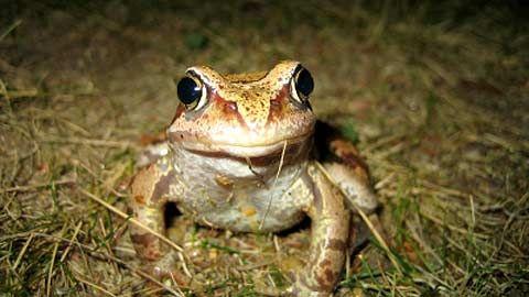 Osa 6: Sammakko Kuudes Luontoruutu kertoo sammakosta