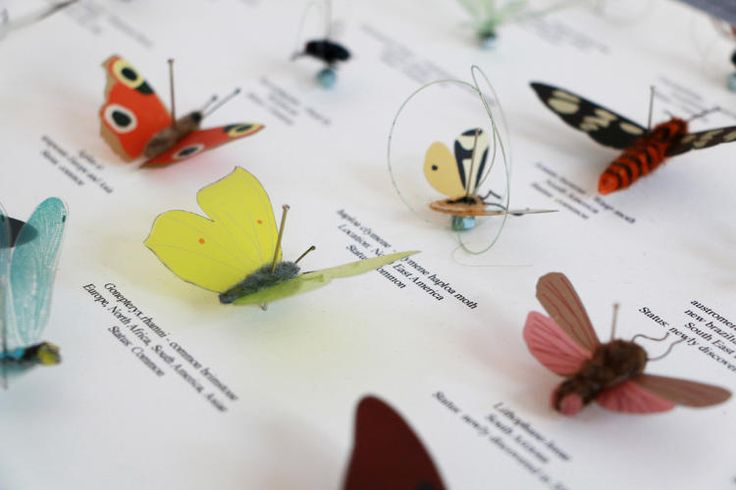 """<p>""""It was important that we did something that suites the museum,"""" says Katharina Mischer, who runs the studio along with her partner Thomas Traxler. """"We thought it would be interesting because the museum is a mixture of showing things and conserving things--that's why the insects are in glass.""""</p>"""