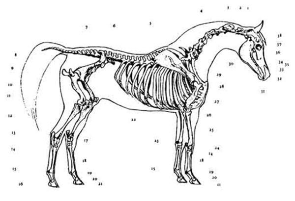 146 best images about creature anatomy on pinterest