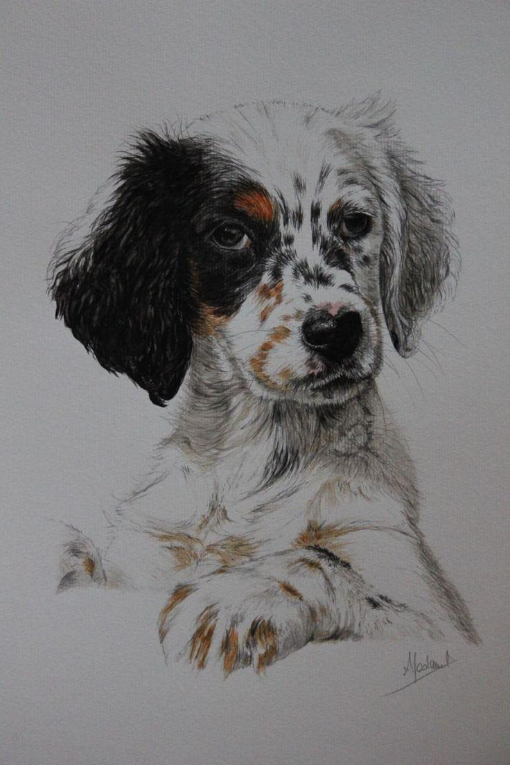 Chiot Setter anglais - Dessin, 49x34 cm ©2014 par Anne MADAMET - Chiens, Setter anglais, chien ...