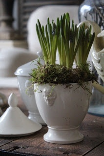 ironstone with muscari