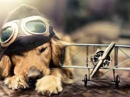 Resultado de imagen para fondos de pantalla hd perros