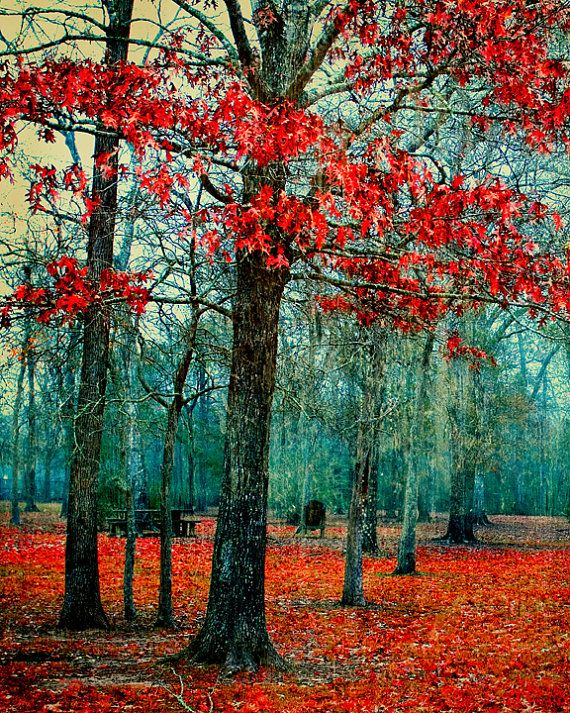 ✮ Autumn: Photos, Bright Pop, Red, Colors, Art, Trees, Landscape, Dripping Cyan