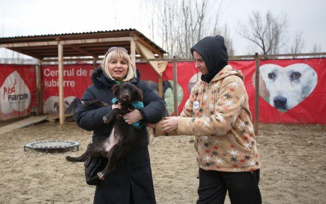 Vedete la adăpost de câini, pentru promovarea unui film candidat la #Oscar