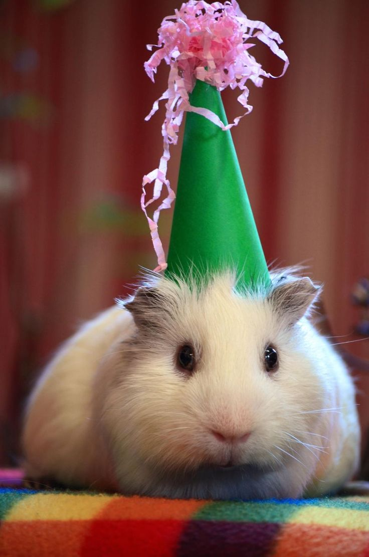 12 Best Birthday Images Images On Pinterest Birthday