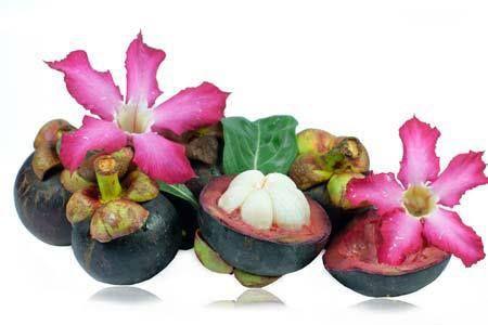 Piante asiatiche, nuovi elisir di bellezza. Conoscevate lo Shikakai? http://wellme.it/bellezza/corpo/5480-piante-asiatiche-nuovi-elisir-di-bellezza