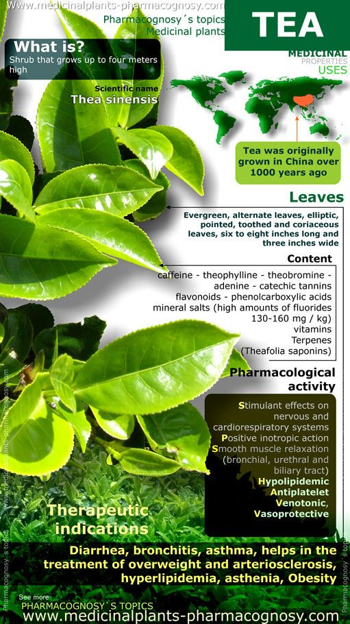 Tea benefits. Infographic. Summary of the general characteristics of the Tea. Medicinal properties, benefits and uses more common.  http://www.medicinalplants-pharmacognosy.com/herbs-medicinal-plants/tea-properties/benefits-infographic/