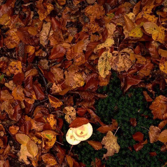 🍁🍂 vs.🌿 . . . . . #autumn #fall #color #gloomy #dark #orange