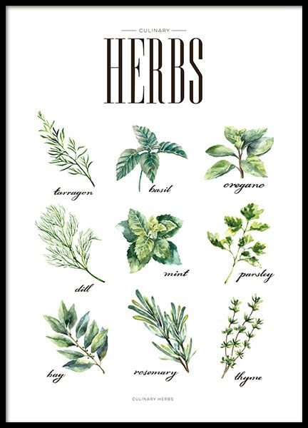 Print for the kitchen with tasty herbs popular when cooking. Kitchen wall art with nice green illustrations that goes well with trendy and modern interior design. You can match it with one or more of our other posters in the category Kitchen art. Nice in a frame, poster-hanger, clips or other suspension. www.desenio.co.uk