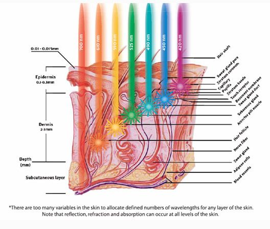 led light therapy and skin layers - Google Search