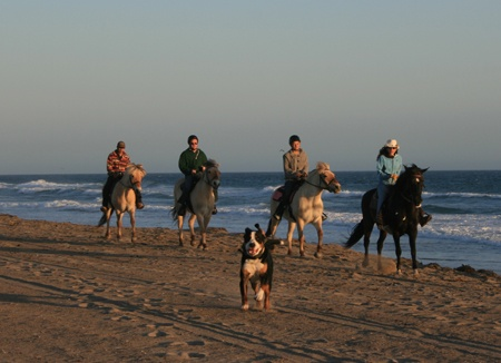 Park Place Stable is a full service stable, offering trail rides, beach rides, lessons, training, and boarding in scenic Malibu, California.
