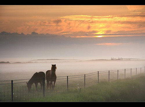 Stunning morning mist - great capture
