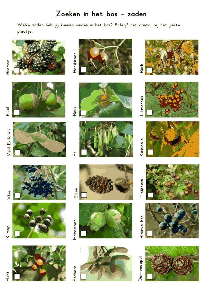 herfst zoeken in het bos zaden.pdf
