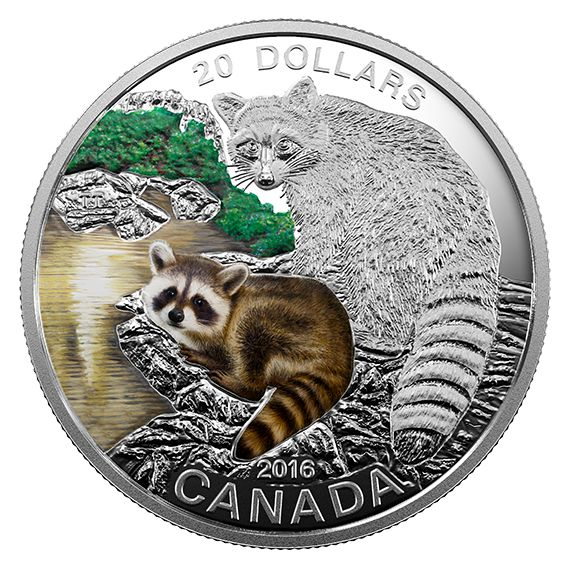 1 oz. Fine Silver Coloured Coin - Baby Animals: Baby Raccoon - Mintage: 5,500 (2016)