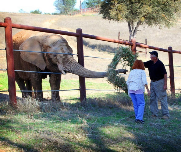 Ed Stewart and Pat Derby, founders of PAWS Elephant Sanctuary.