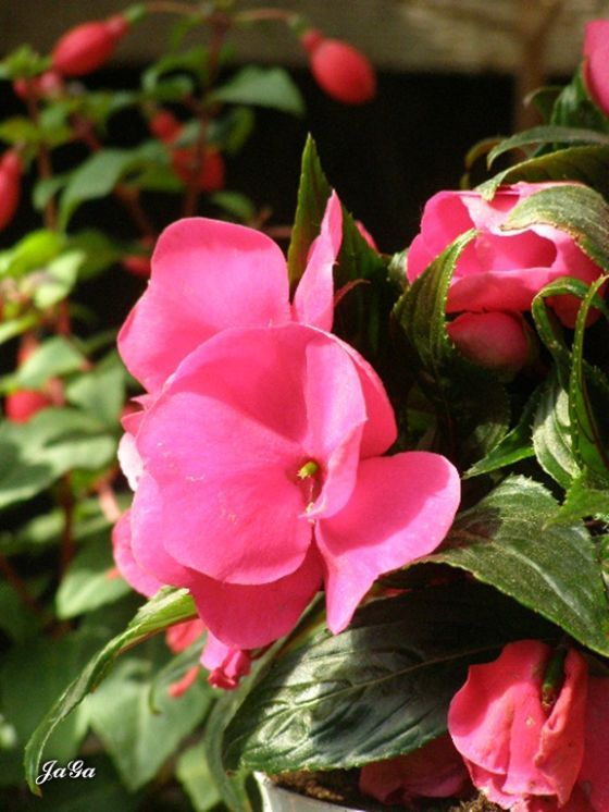 Moje kwiatowe królestwo | Babcia radzi, coś tam ...
