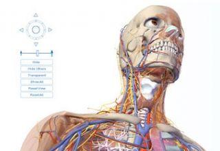 Muestra la parte superior del cuerpo humano en 3d. Se observan claramente vasos como arteria y vena carótida, algunos músculos del cuello así como parte de los huesos del cráneo. #medicina #anatomía #vascular