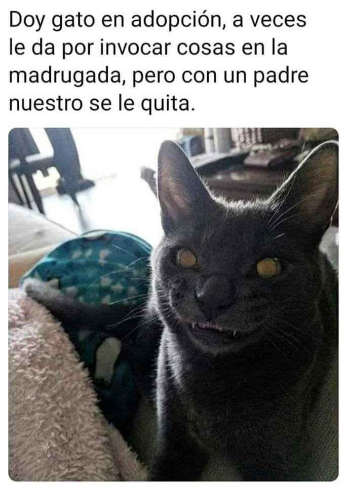 Los Mejores Memes De Gatos Memes En Espanol La Mejor Recopilacion De Memes Lo Mas Viral De Internet Memes Memes Divertidos Mejores Memes
