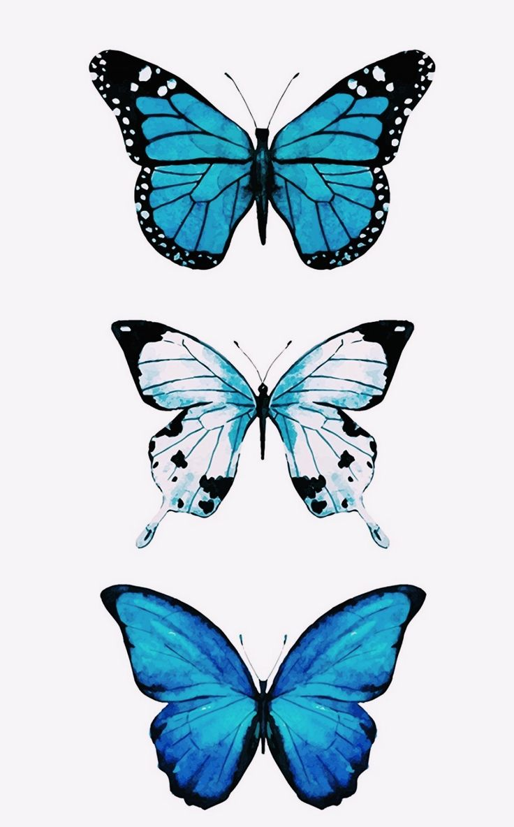 Pin by Lindsay Maloney on drawings ️ in 2020 | Butterfly ...