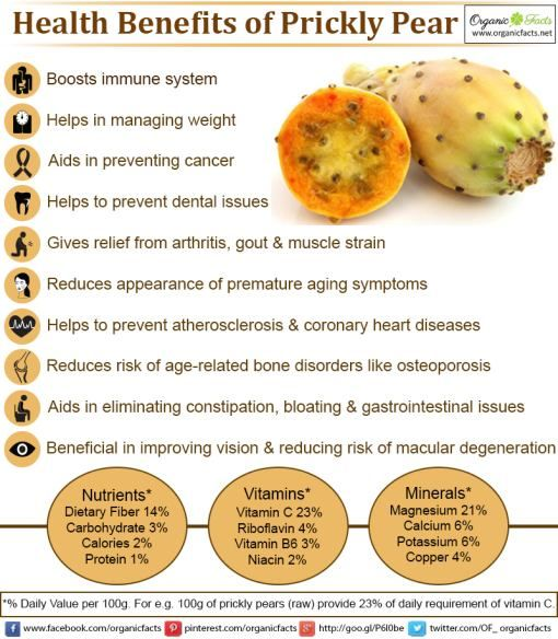 Some of the health benefits of prickly pear include its ability to lower cholesterol levels, improve the digestive process, decrease the risk of diabetes, boost the immune system, stimulate bone growth, strengthen blood vessels, prevent certain cancers, reduce the risk of Alzheimer's, aid in weight loss attempts, and eliminate inflammation throughout the body.