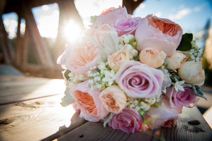 Bridal bouquet of Juliet garden roses, Rosita Vendela pink roses and peach spray roses with accents of white bouvardia and snowberries.  Photo: www.f8photography.com Bouquet: www.flowersbyjanie.com  #Calgaryweddingflorist #Calgaryweddingphotography #snowberries #rosebouquets #julietgardenroses #peachroses