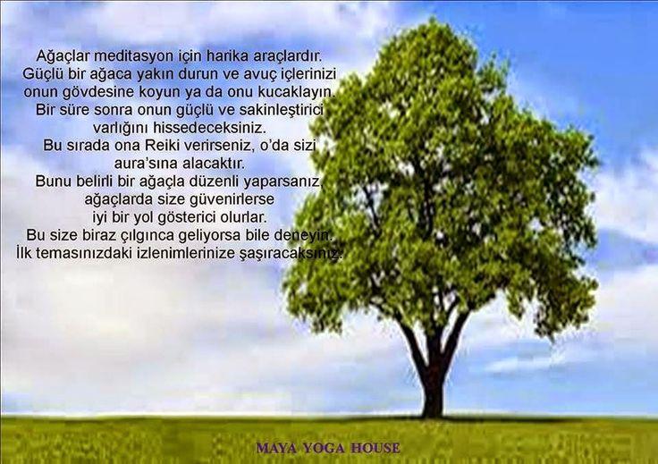 Ağaçlar ve Meditasyon