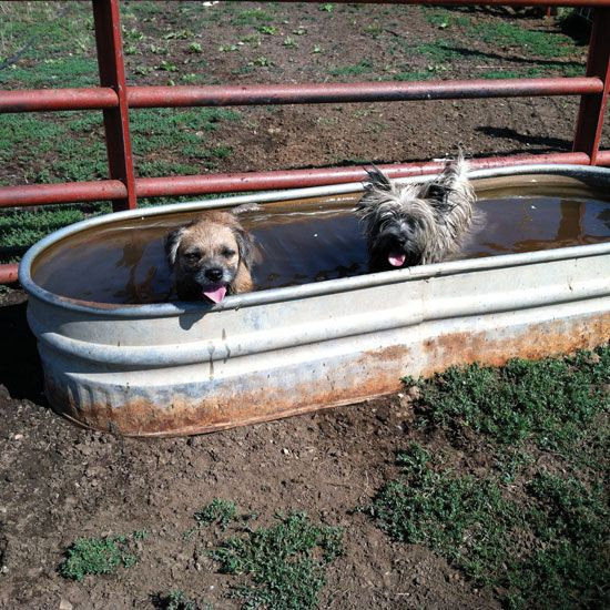 From watering your livestock to taking a cool dip, Hank takes a look at different uses for the versatile stock tank.