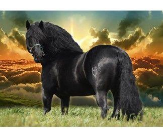 caballos espa�oles, venta de caballos, caballos pre, caballos pura raza espa�ola, caballos negros, venta de caballos pura raza espa�ola, spanish horses, andalusian horses, pre horses, horses for sale,pure spanish horses, horses sale in M�xico, spanish horses in sale, black andalusian horses, horses sale in USA.
