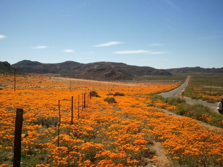 Soek jy verblyf in Namakwaland? Kliek hier: http://www.lekkeslaap.co.za/akkommodasie-in/namaqualand
