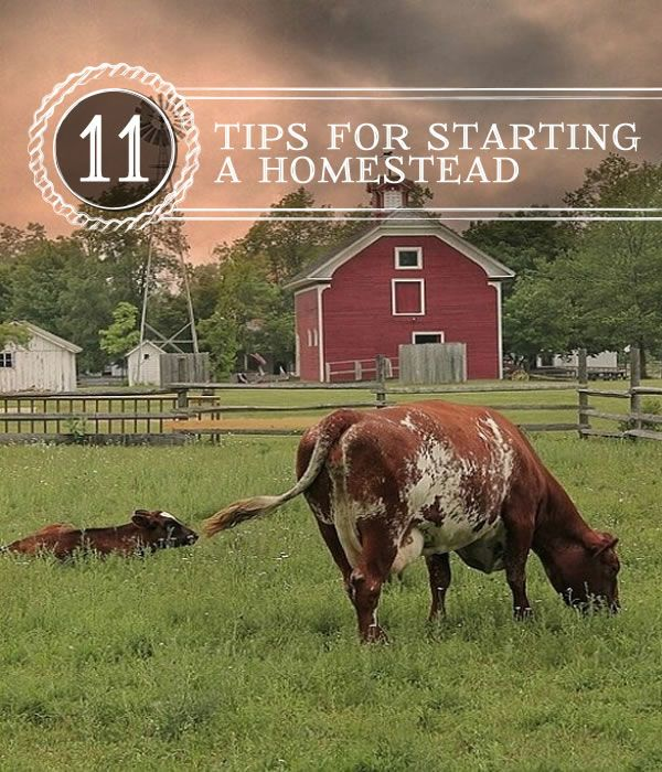 Homesteading tips and ideas, beginners guide to starting your own homestead. | http://pioneersettler.com/11-tips-starting-homestead/