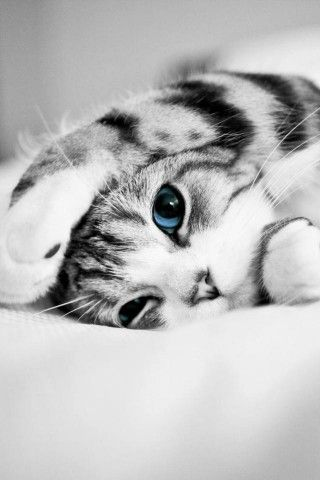 So sweet. Cute Kitten, Love Cats www.livewildbefree.com Cruelty Free Lifestyle & Beauty Blog. Twitter & Instagram @livewild_befree